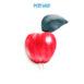 AQS-FC2006-Apple-keycover-01