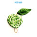 AQS-FC2008-Custard-apple-keycover-01