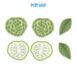 AQS-FC2008-Custard-apple-keycover-02